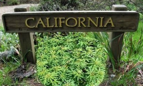 california-weed-mmj-2016-weed-push